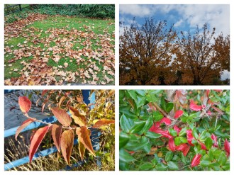 autumn-collage-1