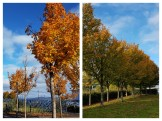 autumn-collage-2