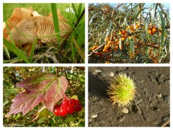 autumn-collage-5